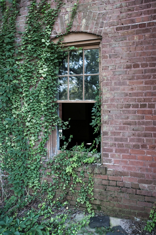 windowand ivy