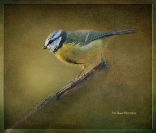 Painterly-bird-1c