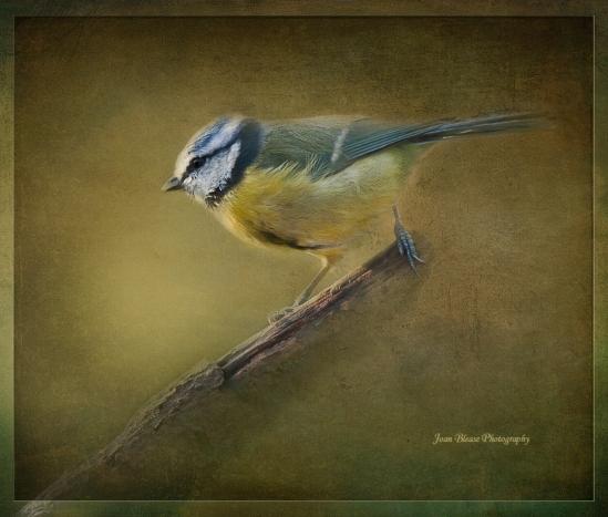 Painterly-bird-1c