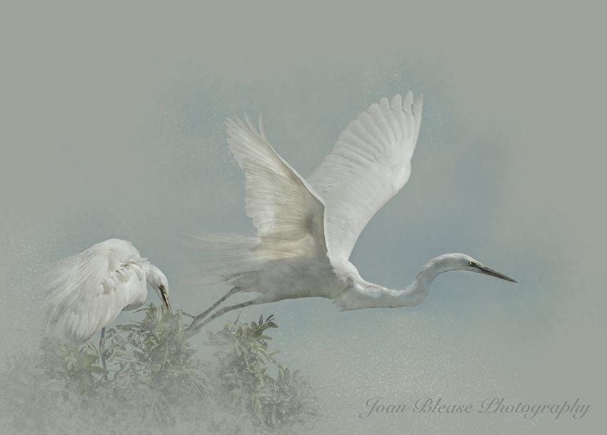 white-bird-in-flight-2a